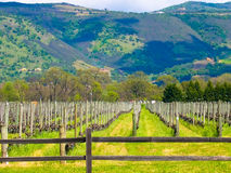 Виноградник Калифорния Стоковое Фото
