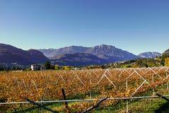 Виноградник ландшафта осени, винтажная предпосылка Стоковое Фото