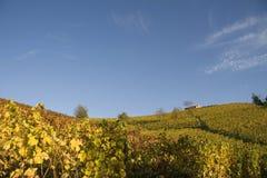 виноградник ландшафта осени Стоковые Изображения