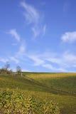 виноградник ландшафта осени Стоковые Фото