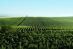 виноградник ландшафта Стоковые Изображения RF
