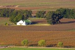 виноградник ландшафта Стоковые Фото