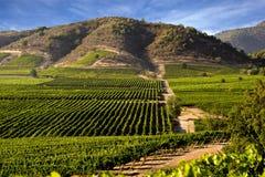 виноградник места Стоковое Изображение RF