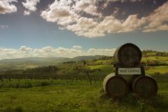 Виноградник на холмах Chianti в Тоскане во время sppring Стоковая Фотография RF