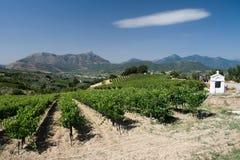 виноградник облака Стоковые Фото