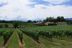 Виноградник около гор женевского озера и швейцарца, Швейцарии стоковые фотографии rf