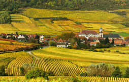 виноградник осени Стоковые Фотографии RF