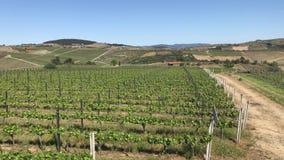 виноградник Португалии акции видеоматериалы