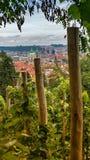 Виноградник, Прага, чехия Стоковое Фото