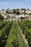 виноградник святой emilion стоковая фотография rf