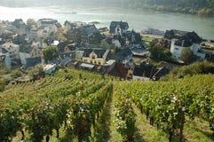 виноградник села предпосылки Стоковое Изображение RF
