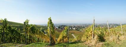 виноградник сельской местности стоковые изображения rf