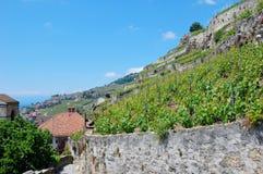 виноградник террас lavaux Стоковое Фото