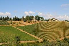 виноградник Тосканы ландшафта Италии Стоковые Изображения