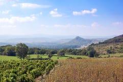 виноградник Франции поля южный Стоковая Фотография