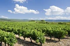виноградник Франции Провансали Стоковое Изображение