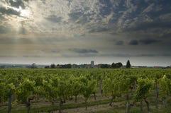 виноградник Франции стоковая фотография