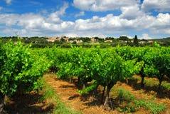 виноградник франчуза сельской местности Стоковые Фото