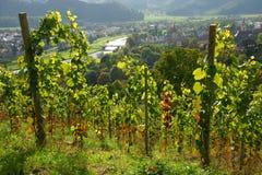 виноградник холма сценарный стоковые фотографии rf
