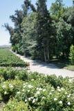 виноградник Чили Стоковое Изображение