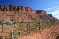 виноградник Юты стоковое изображение rf