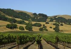 виноградник Стоковое Изображение RF