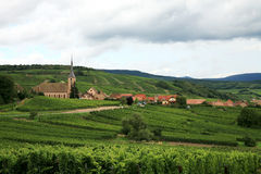 виноградник alsace Франции Стоковые Фотографии RF