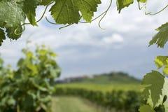 виноградник alsace стоковое изображение rf