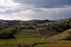 виноградник contryside Стоковая Фотография