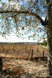 виноградник evora Португалии Стоковое фото RF