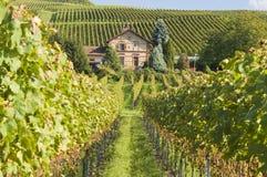 виноградник kaiserstuhl Германии Стоковые Фото