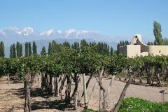 виноградник mendoza Стоковая Фотография