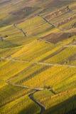 виноградник mosel Стоковая Фотография RF