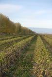 виноградник napa Стоковые Фотографии RF