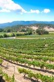 виноградник napa california стоковая фотография rf