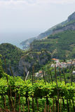 виноградник ravello горного склона Стоковая Фотография RF