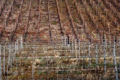 Виноградник Thann в осени стоковое изображение