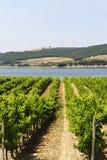 виноградник umbria озера Стоковое Фото