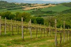 виноградник umbria Стоковая Фотография