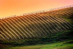 виноградник virginia Стоковые Фотографии RF