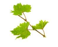 виноградное вино изолировало стоковое изображение rf