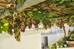 Виноградное вино надземное в задворк белого греческого дома стоковые изображения rf