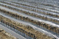 виноградное вино Стоковые Изображения RF