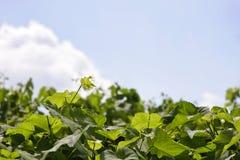 виноградное вино Стоковая Фотография RF