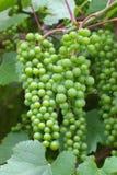виноградное вино Стоковое фото RF