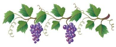 виноградное вино иллюстрация штока