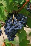 виноградное вино chianti Стоковое фото RF