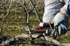 виноградные вина подрежа работника Стоковые Фотографии RF