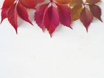 Виноградина выходит на верхнюю часть белой деревянной предпосылки Стоковое Изображение RF