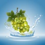 Виноградина в выплеске воды Стоковые Изображения RF